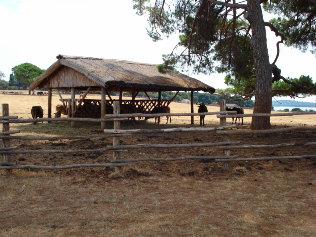 Safari Park Brijuni
